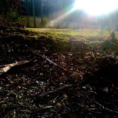 Spotlight on hole 5. #discgolf #spring