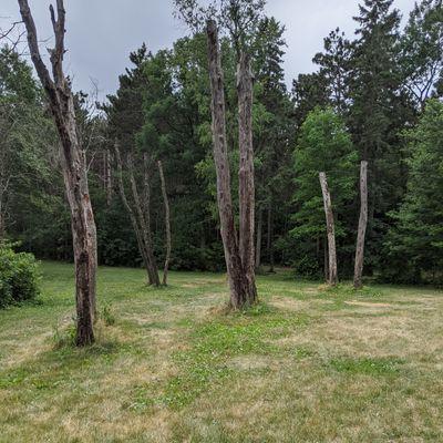 Dead woods