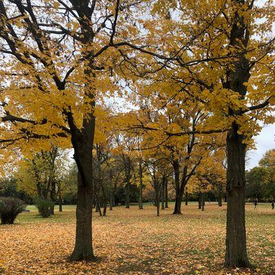 Garfield Park Grand Rapids Mi Udisc Disc Golf Course Directory